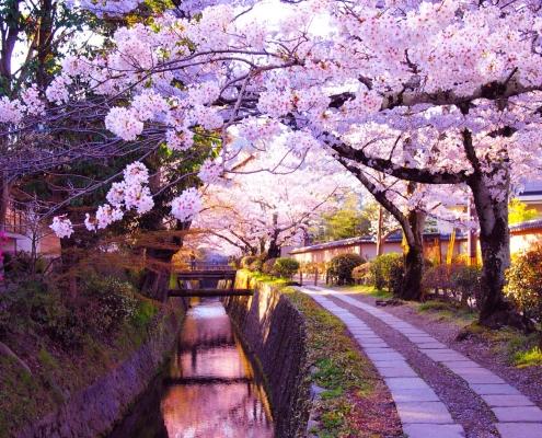 春の哲学の道